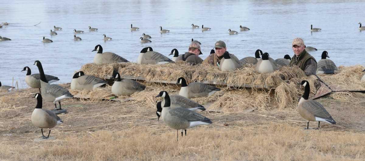 Cheap Canada Goose Decoys On Sale Like Fire